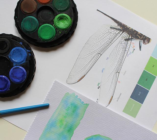 Dragonfly Pilates Portfolio